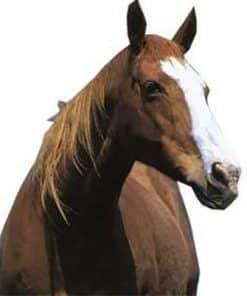 Horse Cardboard Cutout