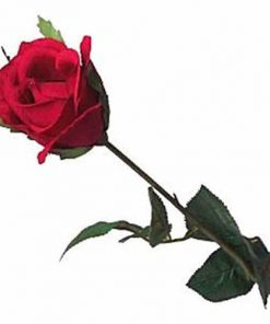 Halloween Long Stem Silk Red Rose