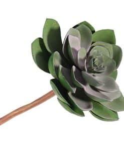 Green Succulent Decoration